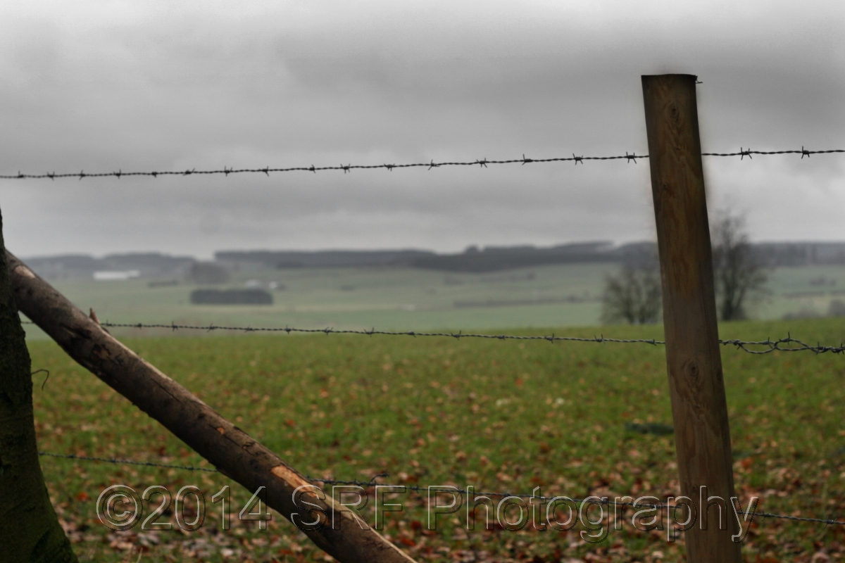 Fields of the Ardennes  (large view)