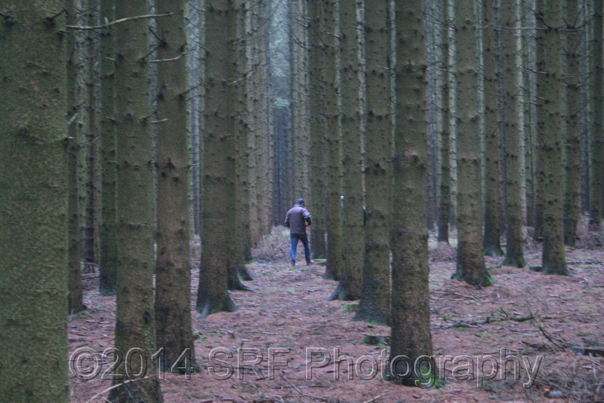Rows of Trees, Ardennes Forest (large view)