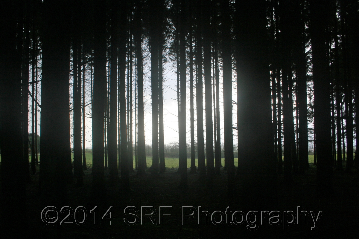 The Ghostly Ardennes  (large view)