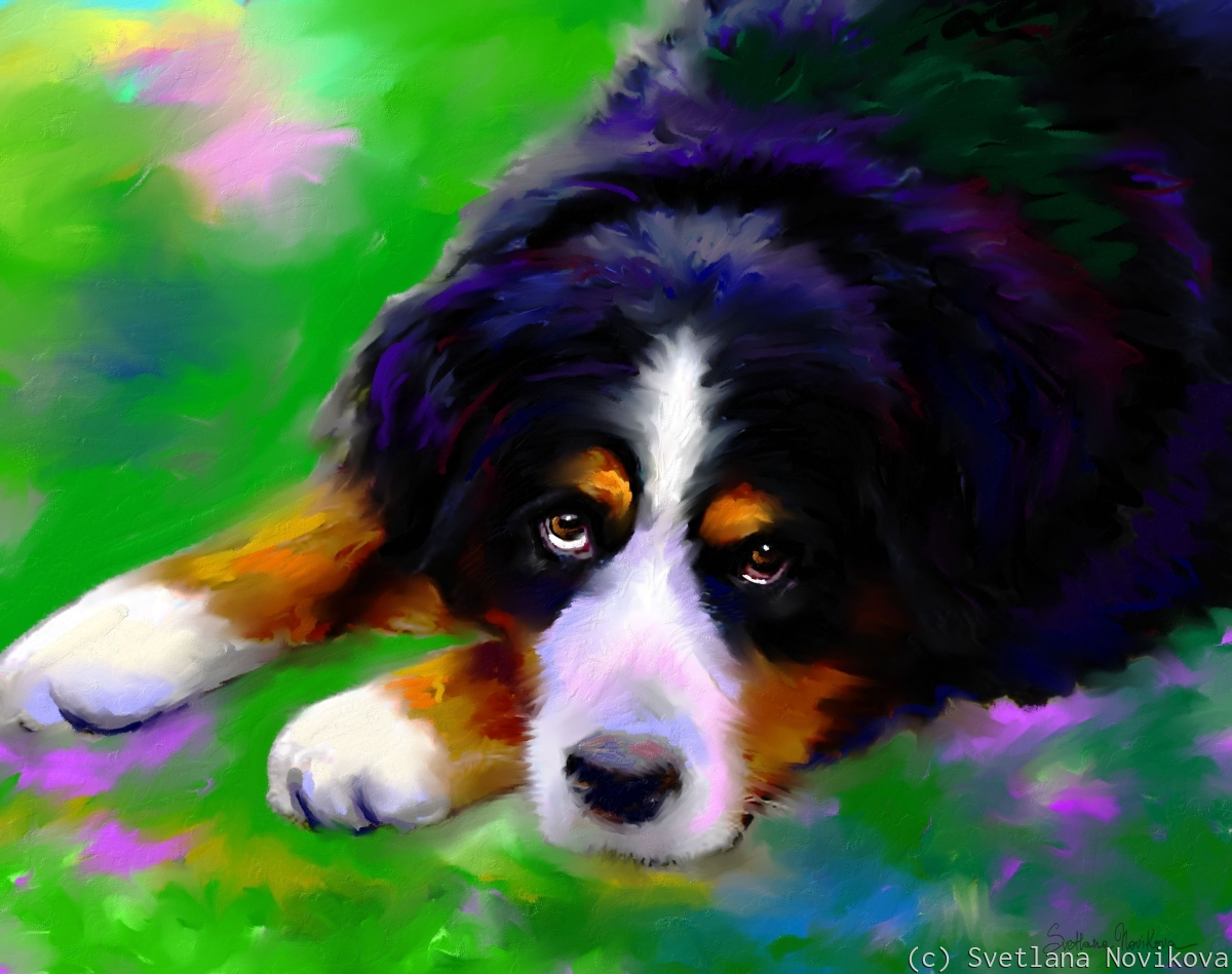 Bernese Mountain dog painting print Svetlana Novikova (large view)