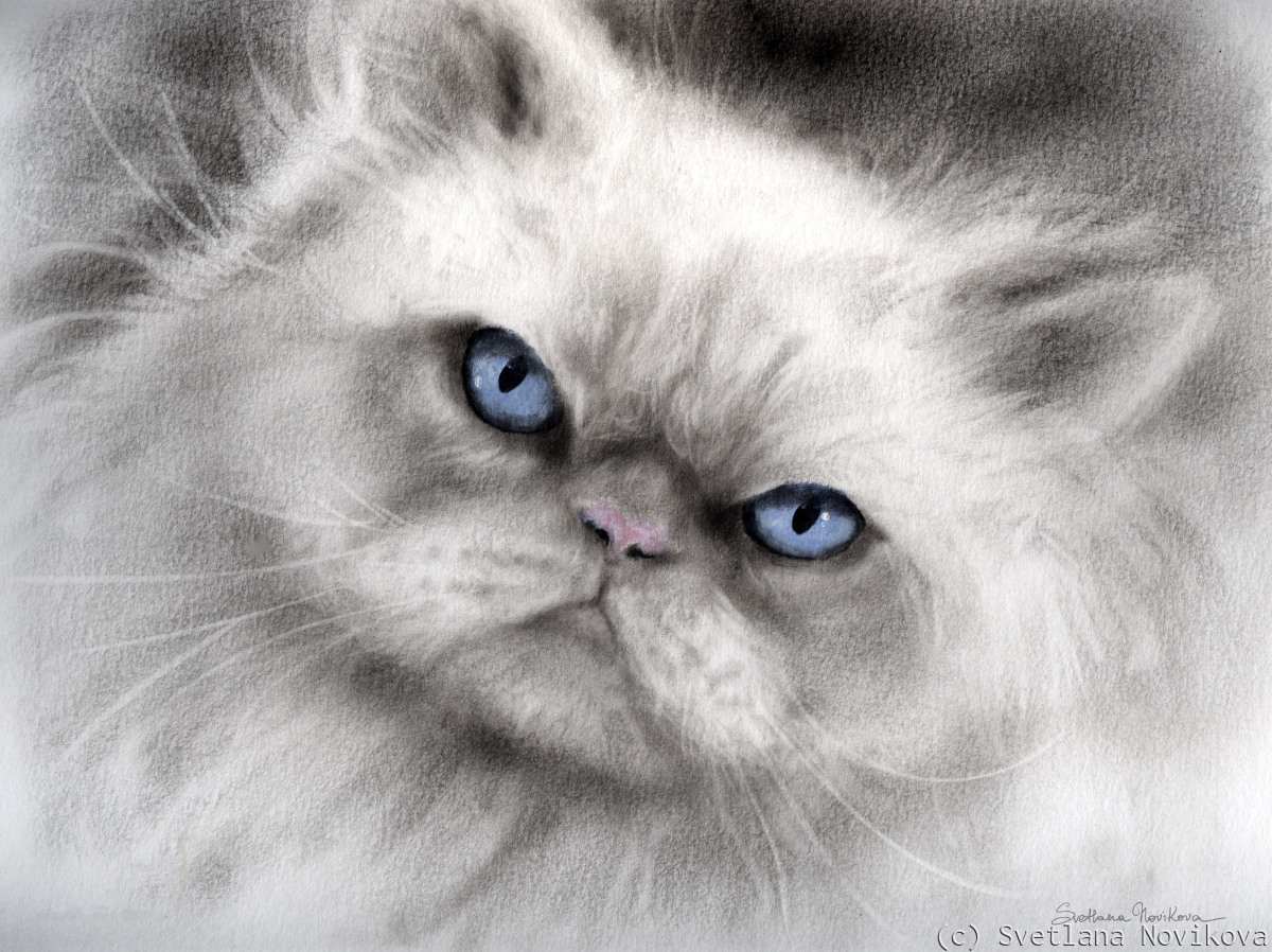 Dramatic Persian Cat portrait painting (large view)
