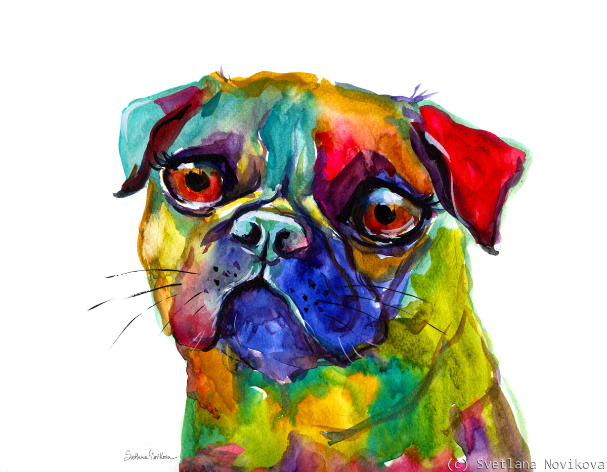Colorful PUG (large view)