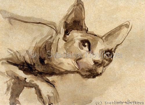 Sphynx cat #41 ink painting Svetlana Novikova (large view)