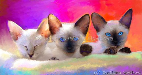 Siamese Kittens Giclee print (large view)