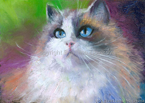 Tabby cat ragdoll (large view)