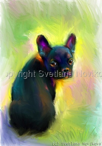 French Bulldog # 2 (large view)