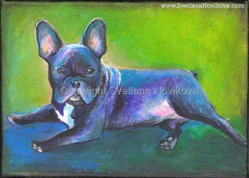 French Bulldog # 4 (large view)