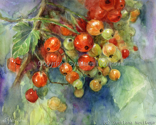 Vibrant juicy watercolor painting of red currants by Svetlana Novikova (large view)
