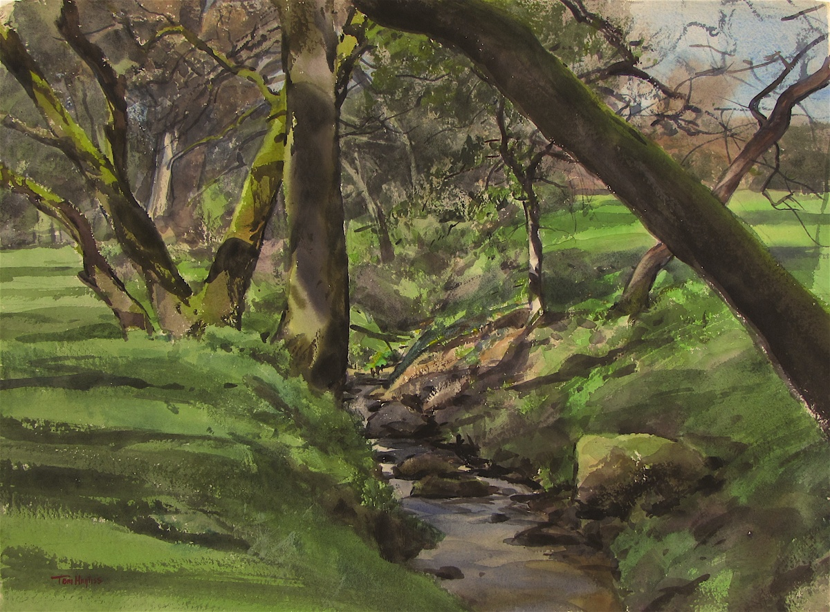 Wooded creek, Sonoma (large view)