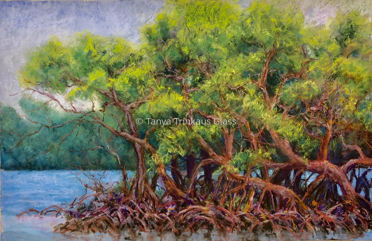 Good Fortune's Mangroves. (large view)
